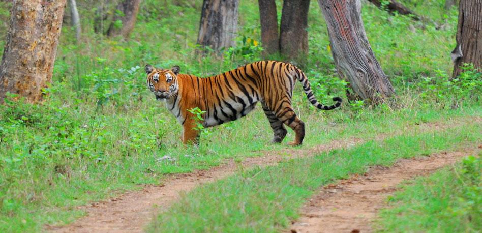 Talacauvery Wild Life Sanctuary